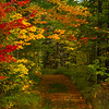 A Pathway Of Color Through The Forest