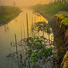 Early Sunrise Over The River Kaziranga National Park, Assam, North-Eastern India