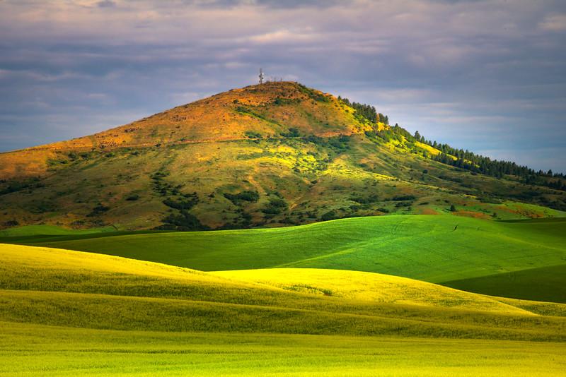 Steptoe Butte In All Its Colors - Stern Road, Garfield, Palouse, WA