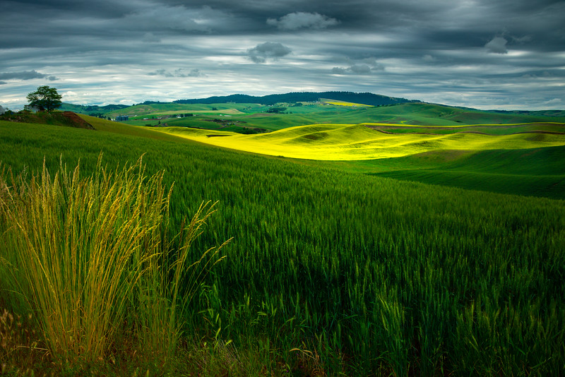 Overlooking The Valley Of Color - Old Moscow/Pullman Road, Palouse, WA