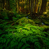 A Touch Of Light On The Flowers - Sol Duc Falls, Olympic National Park, WA