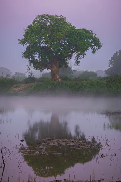 Early Morning Tree Reflections Along Bank Of River Kaziranga National Park, Assam, North-Eastern India