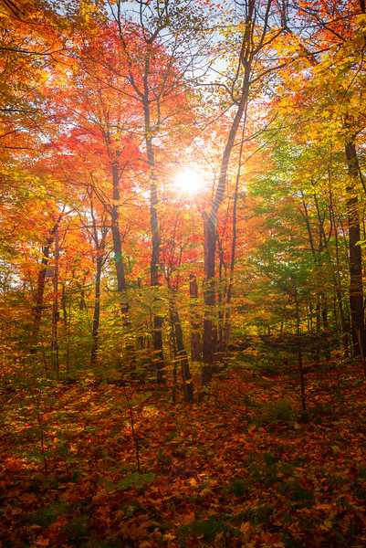 The Colorful Forests Of Algonquin - Algonquin Provincial Park, Nipissing, South Part, Ontario, Canada