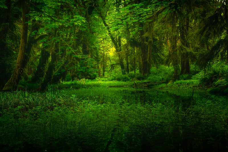 Reflections Of Greenery - Lake Quinault Region, Olympic National Park, WA
