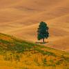 Cross Paths Amongst The Wheat - Palouse, Eastern Washington