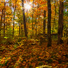 Sun Shines Through The Fall Foliage - Algonquin Provincial Park, Nipissing, South Part, Ontario, Canada