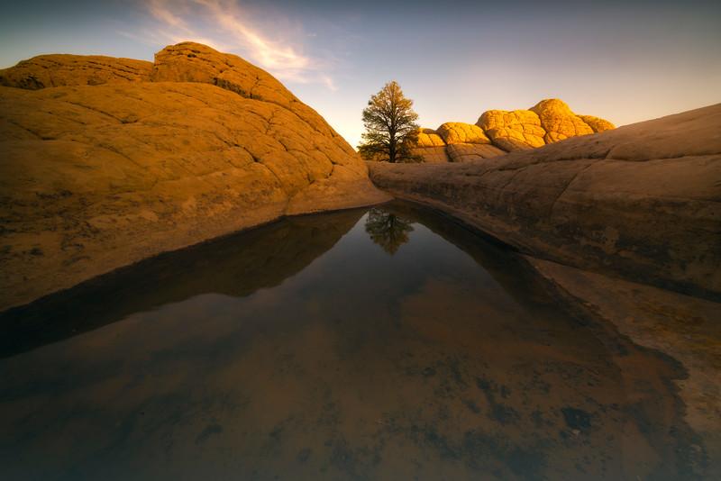 White Pocket Reflection Pool And Lone Tree - White Pockets, Vermillion Cliffs National Monument, Arizona