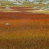Myr i tidlig høstprakt,Hardangervidda
