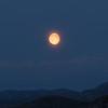Midnattsmåne