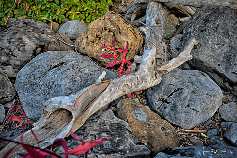 Driftwood In Red