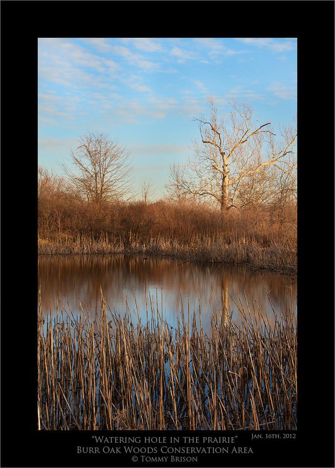 Oak Woods And Prairies Acres of Burr Oaks Woods