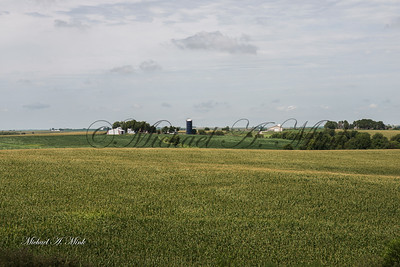 Wheat with farm in background