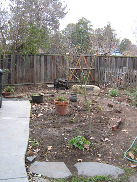 My Native garden, before (January)