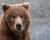 15.  Bear Face
