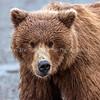 19.  Bear Face