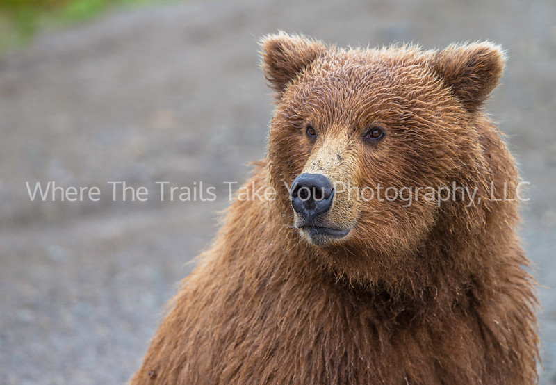 14.  Portrait Of A Bear