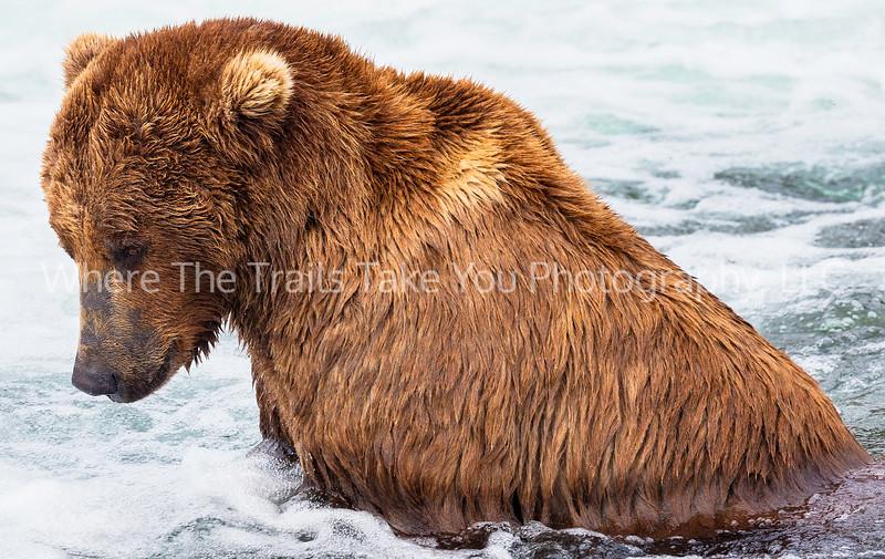 88.  Portrait Of A Bear