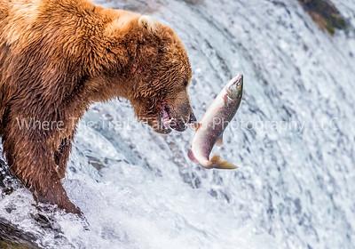 Katmai National Park & Preserve, Alaska