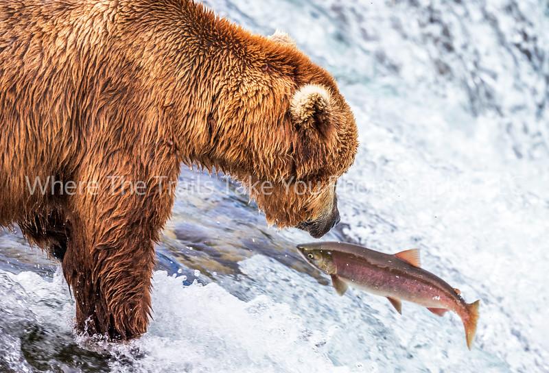 119.  A Bear And A Fish