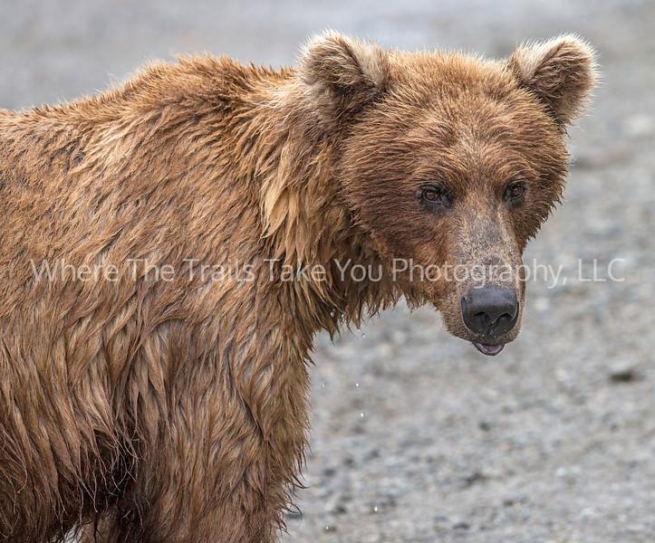 7.  Droopy Lip Bear