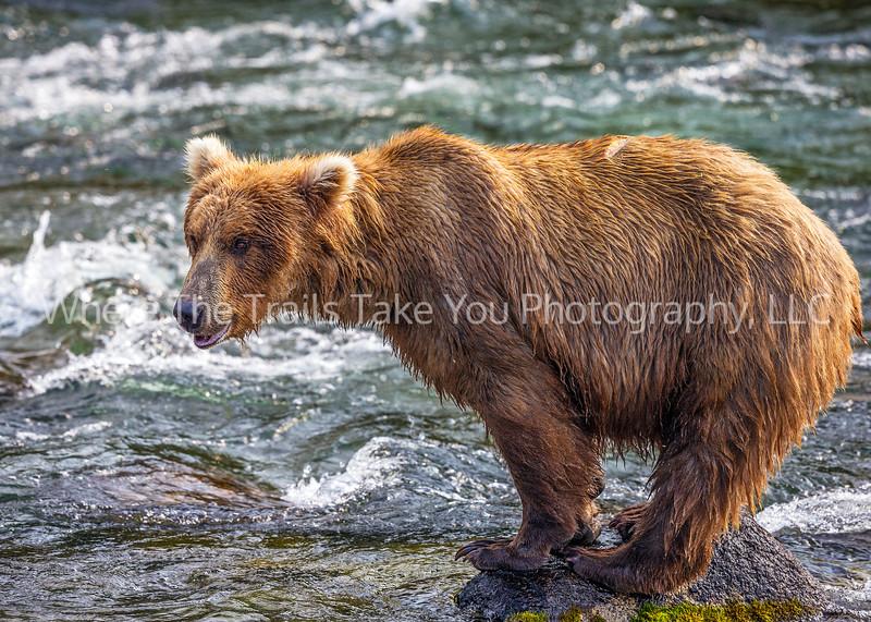 45.  Bear On A Rock