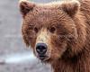 18.  Bear Face