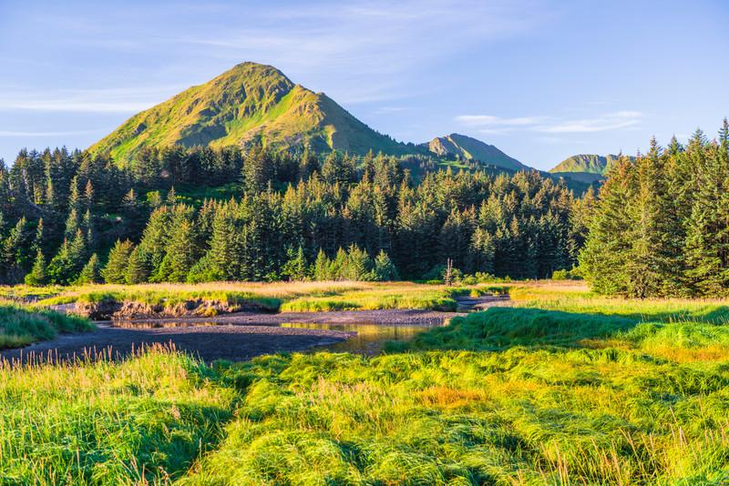 Katmai-Alaska-Kukak-Bay-Grizzly-Brown-Bears-_D8X6476