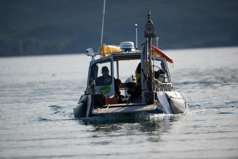 Katmai-Alaska-Kukak-Bay-Grizzly-Brown-Bears-_D8X7567