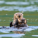 OtterPair_D8X6650 Square