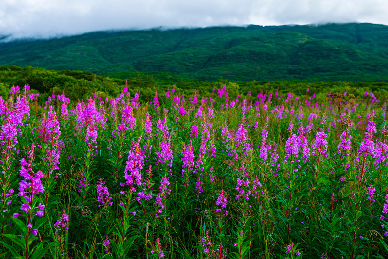Katmai-Alaska-Kukak-Bay-Grizzly-Brown-Bears-_D8X9802