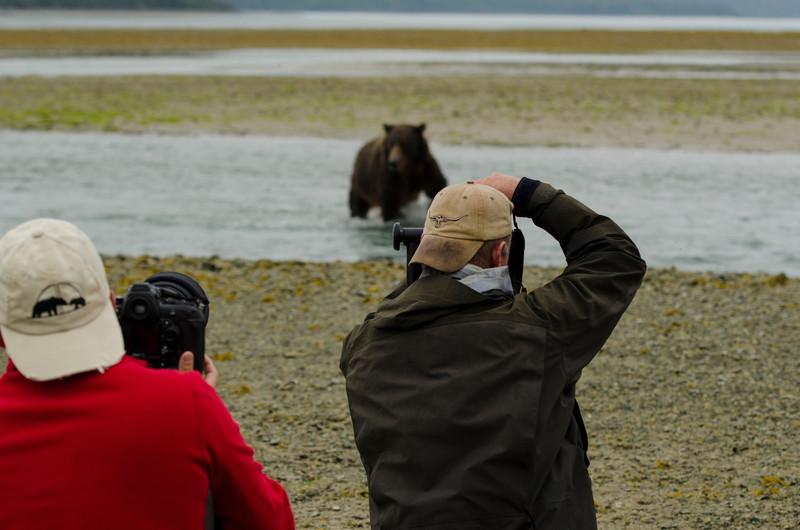 Katmai-Alaska-Kukak-Bay-Grizzly-Brown-Bears-_J700420