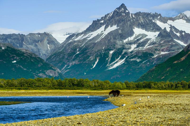 Katmai-Alaska-Kukak-Bay-Grizzly-Brown-Bears-_D8X9869