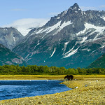 Katmai-Alaska-Kukak-Bay-Grizzly-Brown-Bears-_D8X9869