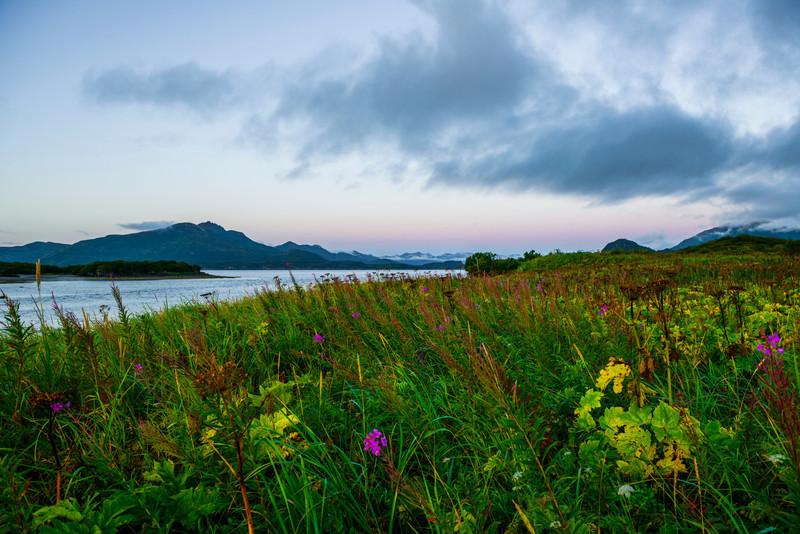 Katmai-Alaska-Kukak-Bay-Grizzly-Brown-Bears-_D8X9809