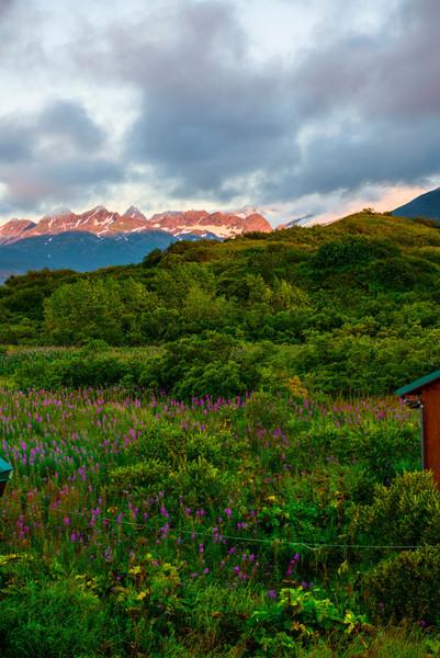 Katmai-Alaska-Kukak-Bay-Grizzly-Brown-Bears-_D8X9836