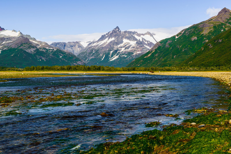 Katmai-Alaska-Kukak-Bay-Grizzly-Brown-Bears-_D8X0031