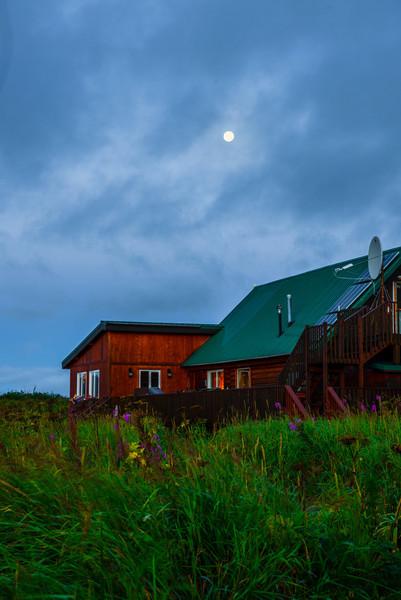 Katmai-Alaska-Kukak-Bay-Grizzly-Brown-Bears-_D8X9798