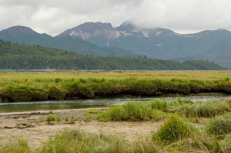 Katmai-Alaska-Kukak-Bay-Grizzly-Brown-Bears-_J700538