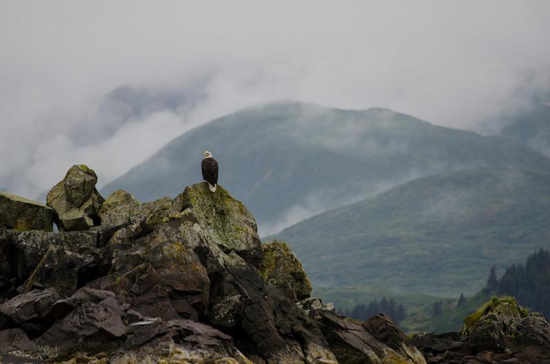 Katmai-Alaska-Kukak-Bay-Grizzly-Brown-Bears-_J700291
