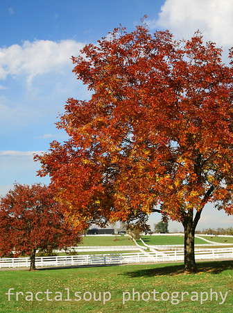 Horse Farm with White Fences and Autumn Colors