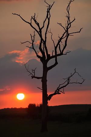 Dead tree enjoying a Summer evening.