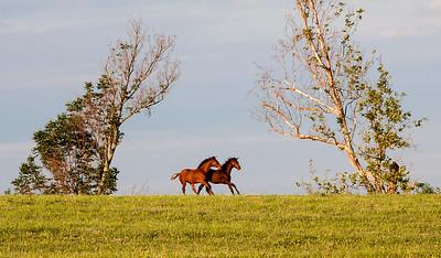 Horses at play_MG_8411