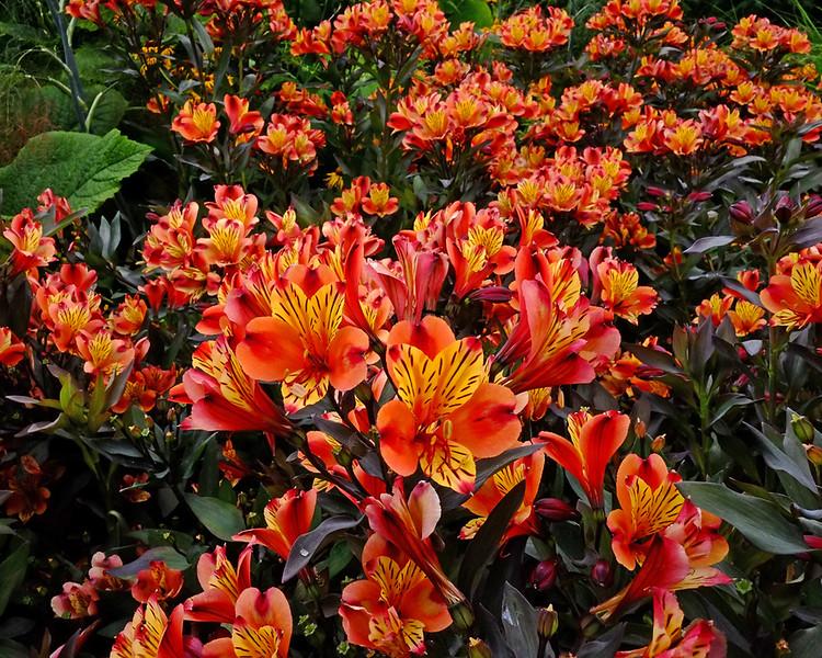 Kew Gardens, South London