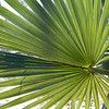 Palm 2