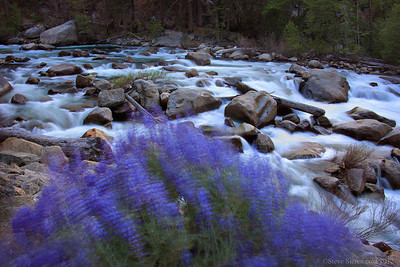 Wildflowers on the South Fork of the Kings River, Sequoia National Forest.
