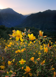 Blooming wildflowers in Kings Canyon, Sequoia National Forest