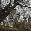 Rosenborg under piletræet - Rosenborg castle under the willow.<br /> København, Danmark.<br /> Fish eye photo painted with digtal oil, fine point pen i Corel Painter.