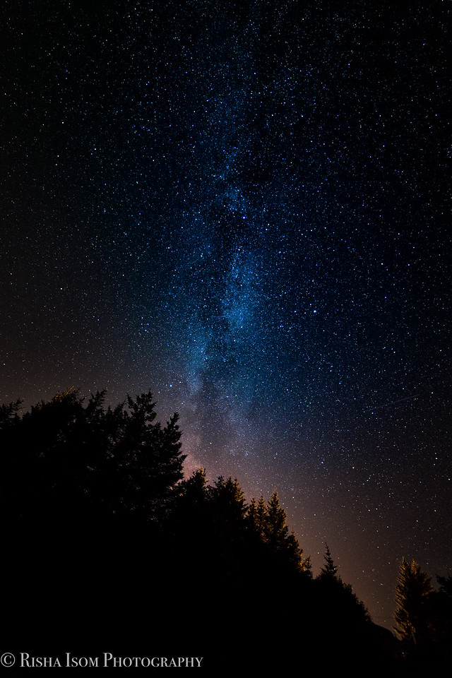 Spruce Tips & Milky Way