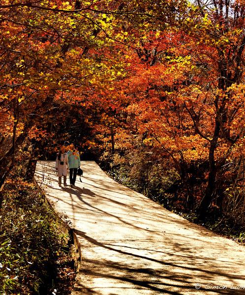 Korea_2010 10_4489628_prv
