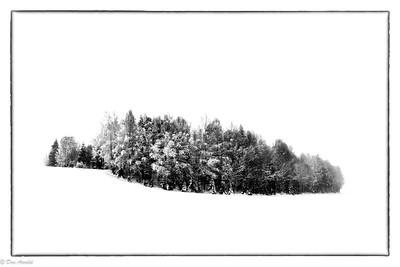 Skogsholme